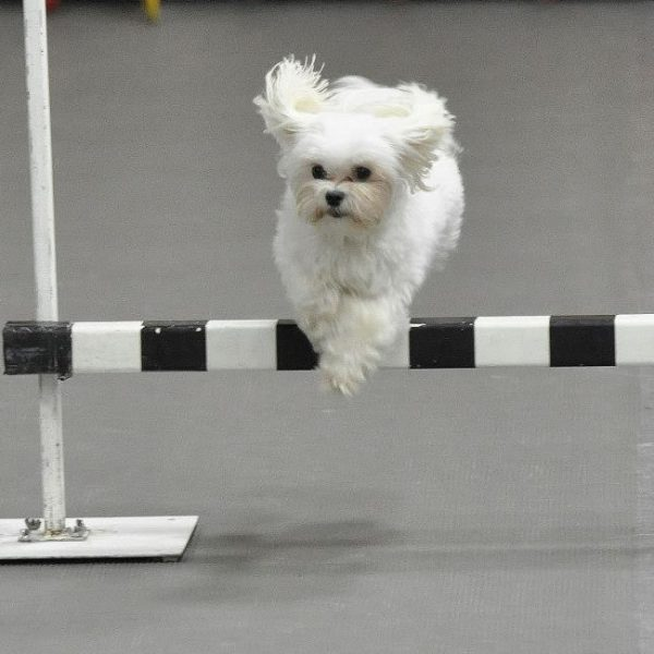 agility classes