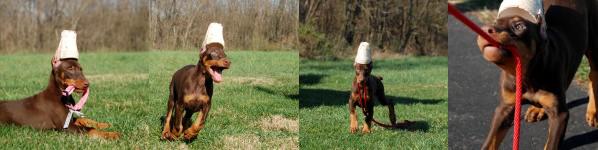 Bourbon Puppy Pics